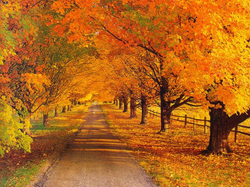 Fall scenery_78